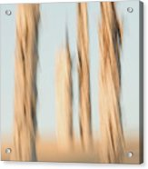 Dead Conifer Trees In Sand Dunes Acrylic Print