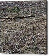 Dead Earth Acrylic Print