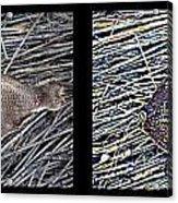 Dead Fish Lives 66b Acrylic Print