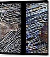 Dead Fish Lives 6a Acrylic Print