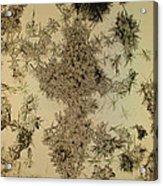 Dead Flowers Acrylic Print