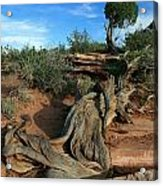 Dead Horse Point Tree 1 Acrylic Print