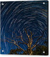 Dead Oak With Star Trails Acrylic Print