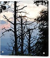 Dead Pines Along The Parkway Acrylic Print