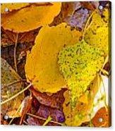 Dead Poplar Leaves Acrylic Print