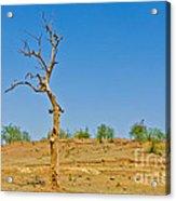 Dead Single Tree Acrylic Print