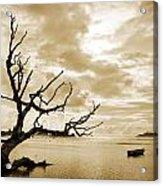Dead Tree And Sea Acrylic Print