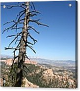 Dead Tree At Bryce Canyon  Overlook Acrylic Print