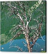 Dead Tree At Green River Lakes -wyoming Acrylic Print