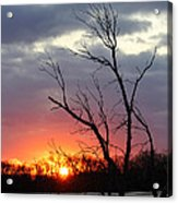 Dead Tree At Sunset Acrylic Print