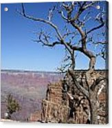 Dead Tree At The View Point Acrylic Print