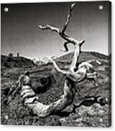 Dead Tree Craters Of The Moon Id Acrylic Print