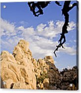 Dead Tree Limb Hanging Over Rocky Landscape In The Mojave Desert Acrylic Print