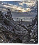 Dead Tree On Beach Acrylic Print