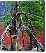 Dead Tree On Cinder At Sunset Crater Acrylic Print