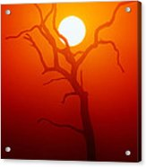 Dead Tree Silhouette And Glowing Sun Acrylic Print