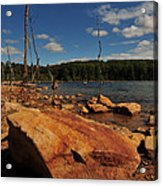 Dead Trees And Rocks Acrylic Print