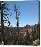 Dead Trees At Bryce Canyon Acrylic Print