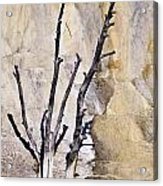 Dead Trees At Mammoth Acrylic Print