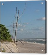 Dead Trees At The Seaside Acrylic Print