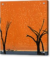 Dead Trees By Red Sand Dunes, Dead Acrylic Print