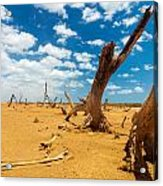 Dead Trees In A Desert Wasteland Acrylic Print