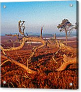 Dead Trees, Southern Uplands Acrylic Print