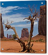 Dead Wood In Monument Valley Acrylic Print