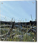 Deadfall And Grasses And Brushed Blue Skies Acrylic Print