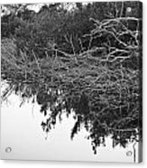Deadfall Reflection In Black And White Acrylic Print