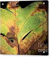 Death Of A Leaf Acrylic Print