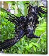 Death Raven Hanging In The Rope Acrylic Print