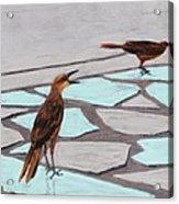 Death Valley Birds Acrylic Print by Anastasiya Malakhova