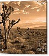 Death Valley Solitude Acrylic Print