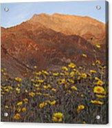 Death Valley Spring 2 Acrylic Print