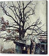 Decay Barn Acrylic Print