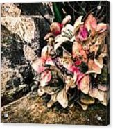 Decayed Pink Acrylic Print