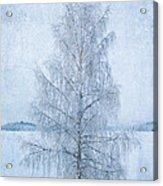 December Birch Acrylic Print