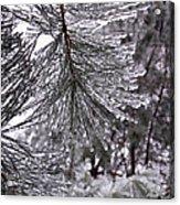 December Freeze  Acrylic Print
