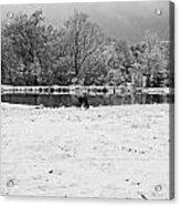 December Snow 006 B-w Acrylic Print