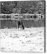 December Snow 007 B-w Acrylic Print