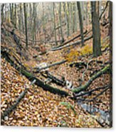 Deciduous Forest With Ravines Acrylic Print