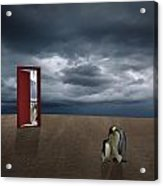 Decision Of Penguin Acrylic Print