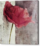 Decor Poppy Acrylic Print by Priska Wettstein