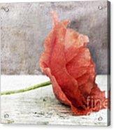 Decor Poppy Red Acrylic Print