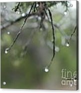 Decorated For Christmas Acrylic Print by Barbara Shallue