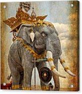 Decorative Elephant Acrylic Print by Adrian Evans