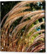 Decorative Grass Wind Autumn And Orton Acrylic Print