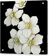Decorative White Floral Flowers Art Original Chic Painting Madart Studios Acrylic Print