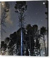 Deep Forest At Night Acrylic Print